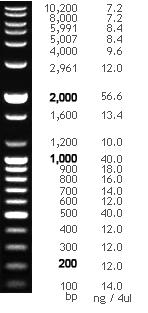Bioneer Pacific 100 Bp Plus Dna Ladder